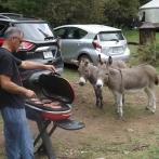 Nos ânes de compagnies!