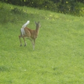 Les animaux qu'on peut croiser en route :)
