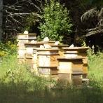 Nos ruches!