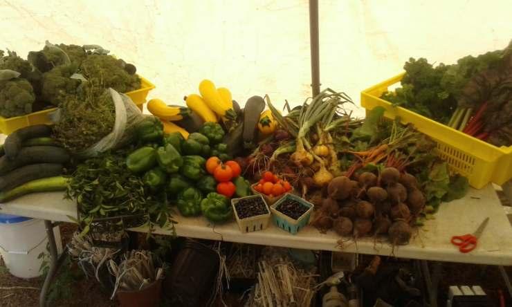 Légumes Vieux-Désert